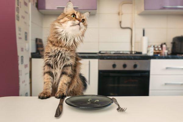 Kittens Feeding Schedule