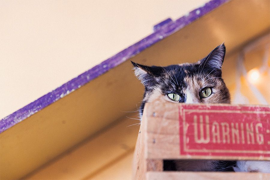 Signs of an Eye Injury in Cats