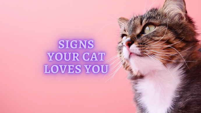 8 signs your cat loves you