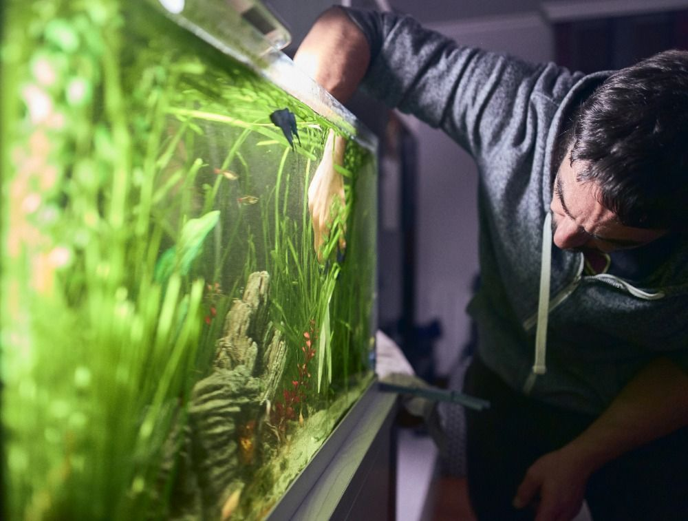 how to take care of a freshwater fish fank