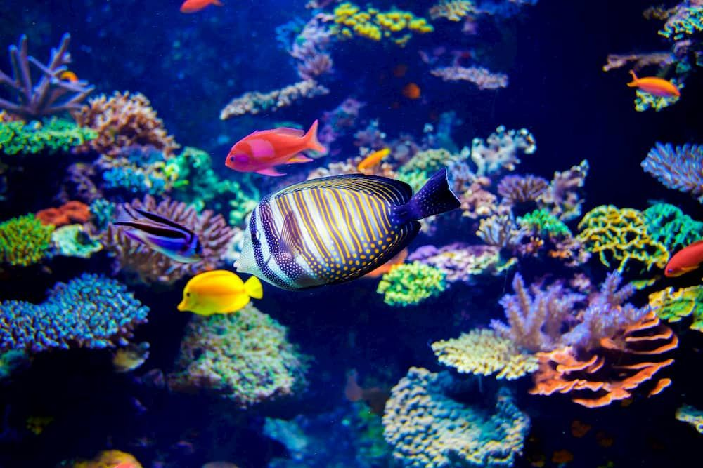 how to raise ph in a reef tank