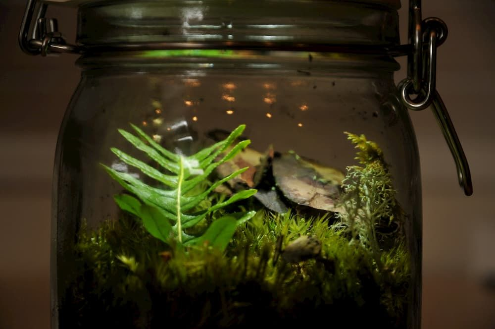 acrylic-vs-glass-aquarium