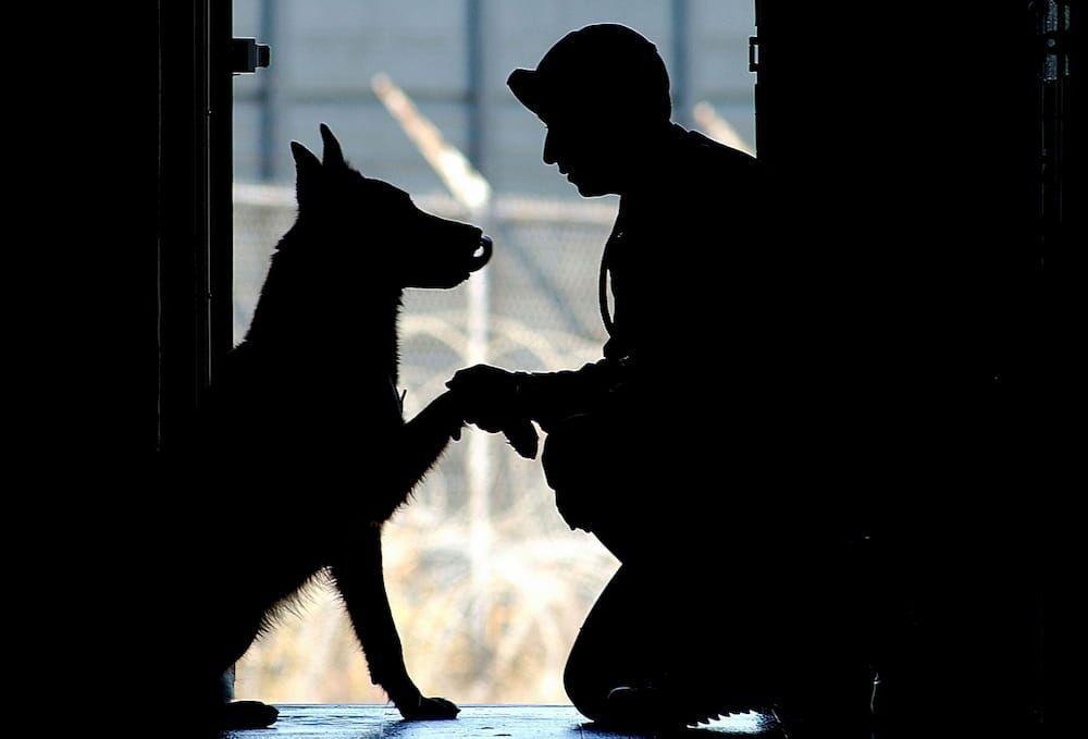 adopting retired military dog