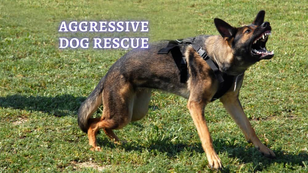 aggressive dog rescue