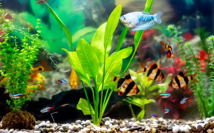 Top 10 Plants Suitable for Goldfish