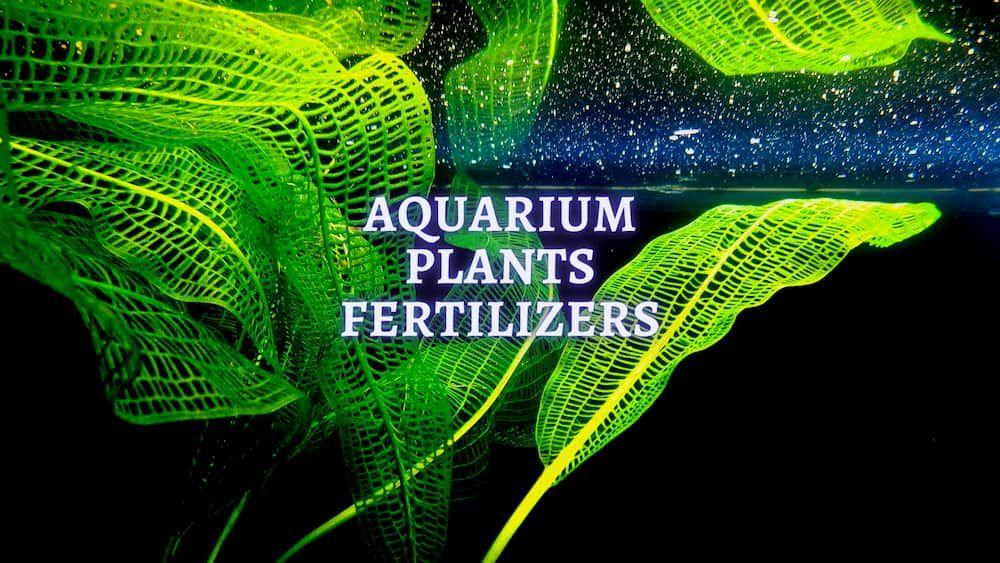 aquarium plants fertiliers
