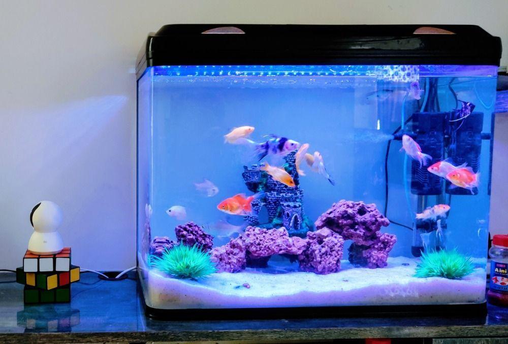 aquarium temperatures for fish tank