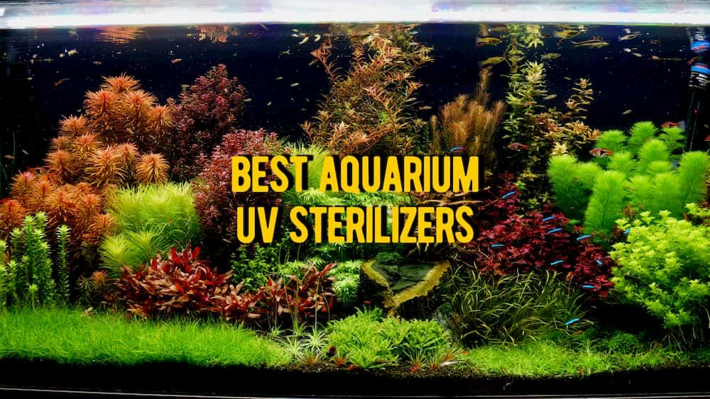 aquarium uv sterilizer review