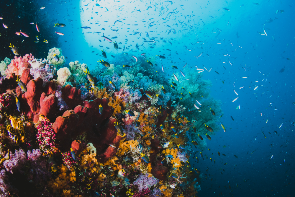aquarium water changing