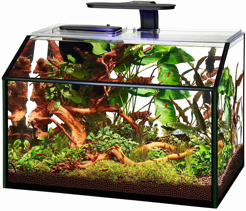 aqueon led gallon shrimp aquarium kit-min