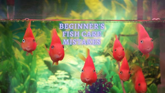 beginner fish care mistakes