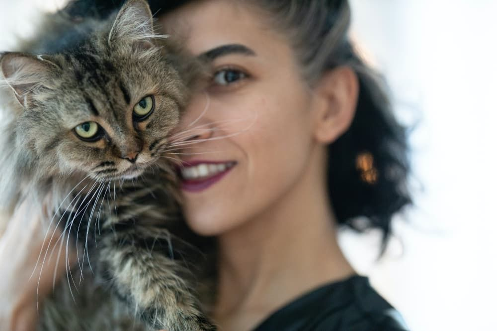 benefits of cbd oil for cat cancer