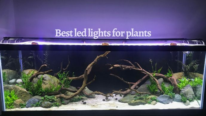best 10 led lights for aquarium plants