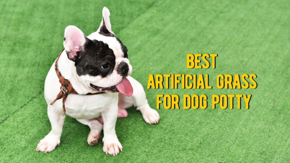 best artificial grass for dog potty