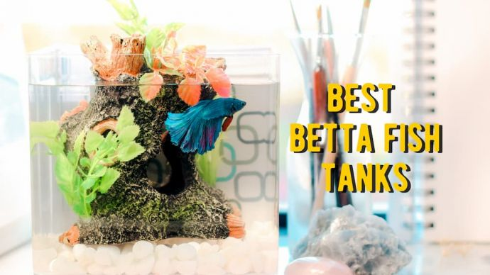 best betta fish tanks