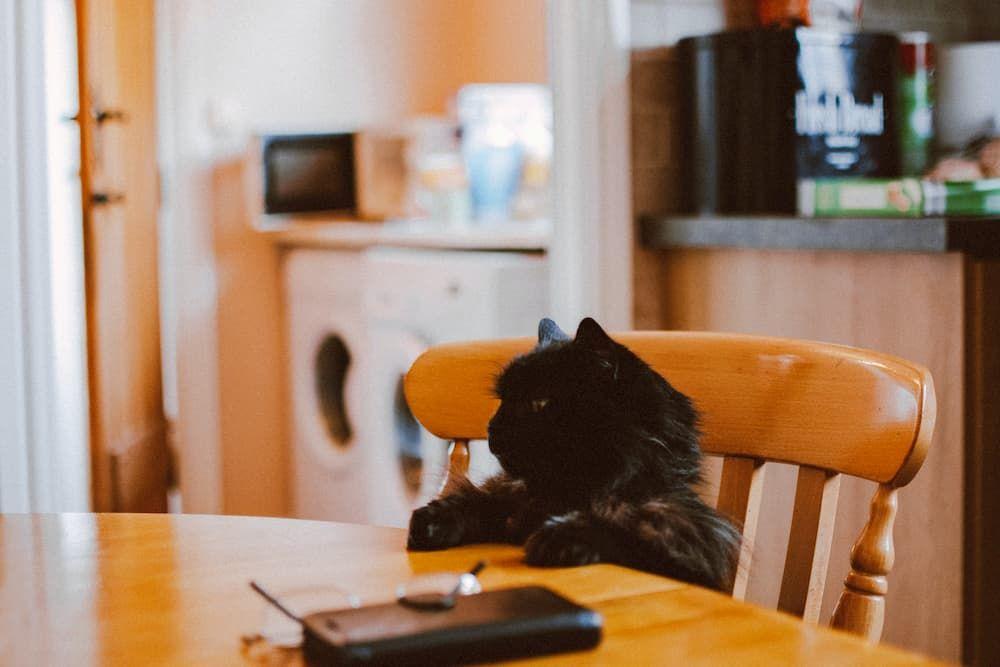 best brands of cat food for indoor cats