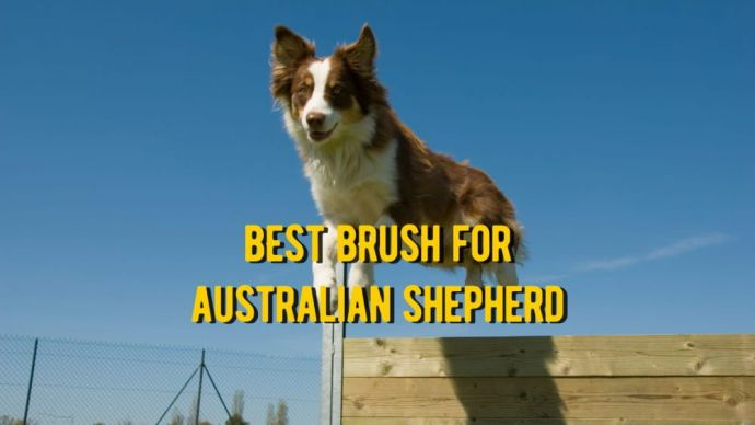 best brush for australian shepherd