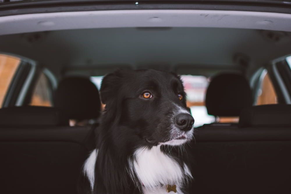 best car seat covers for dogs