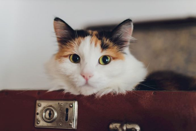 Best Cat Backpacks [2020 Reviews]