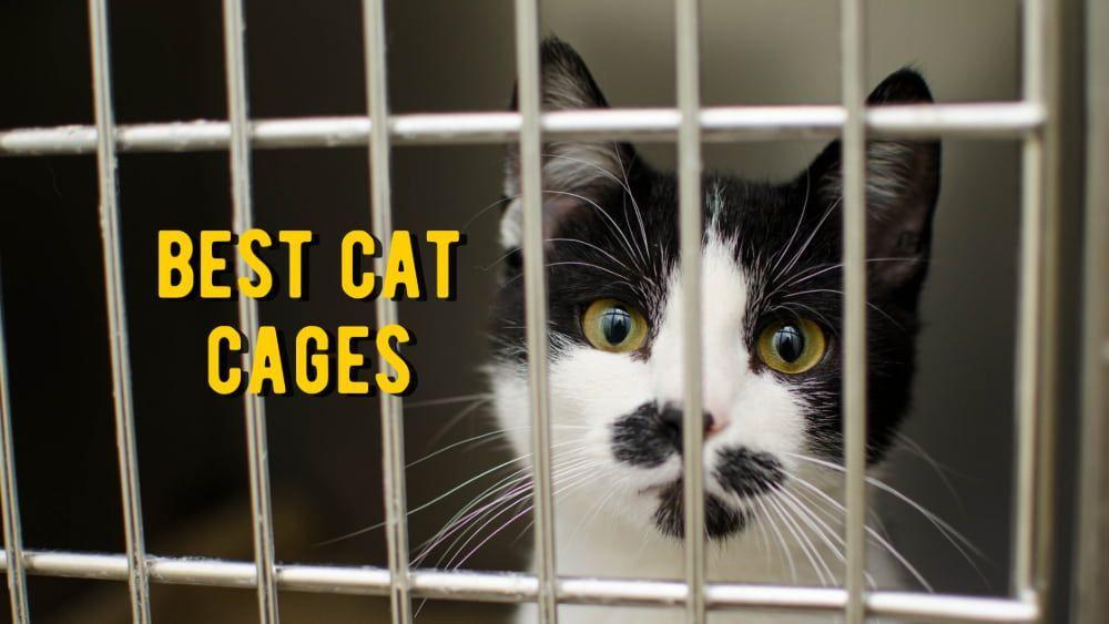 best cat cages