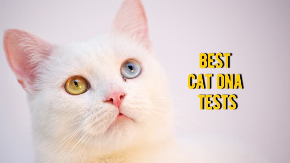best cat dna test