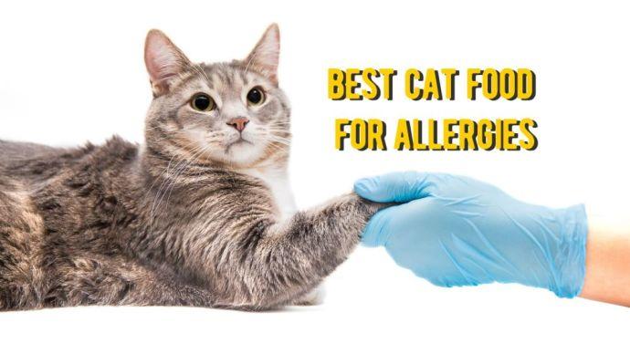 best cat food for allergies