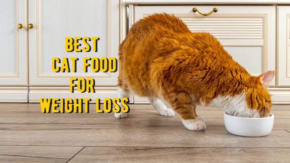 best cat food for weight loss review