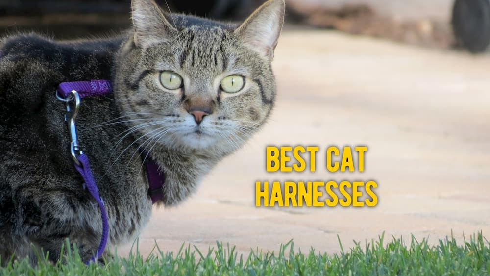 best cat harnesses