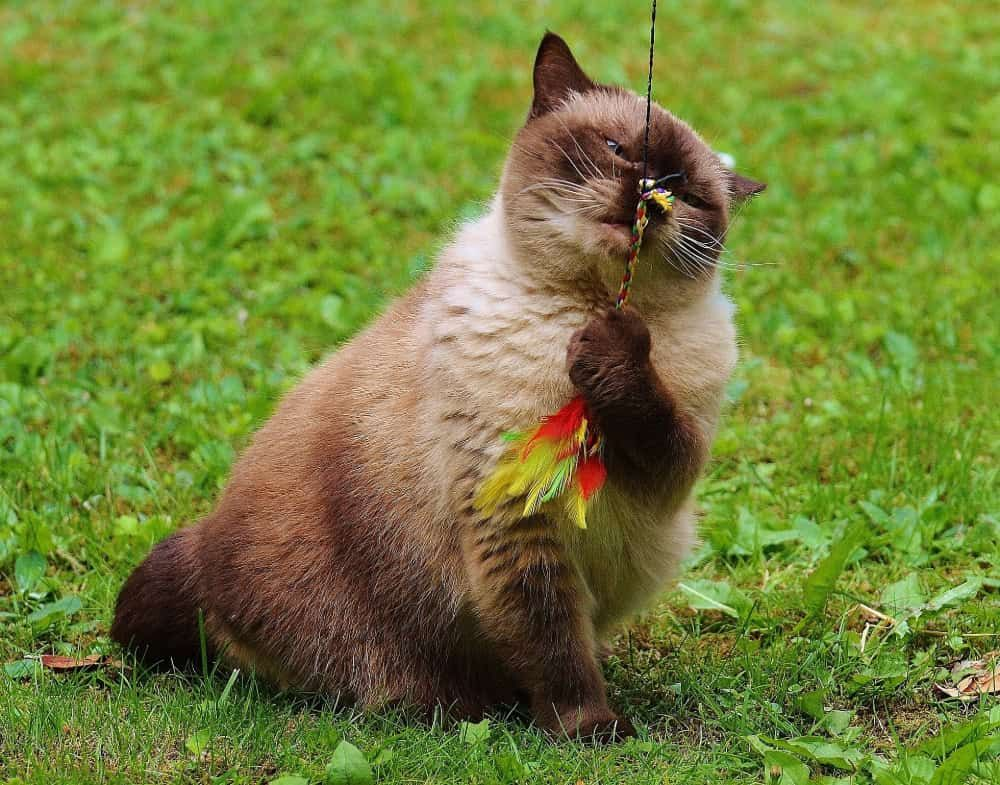 best cat toys for active cat