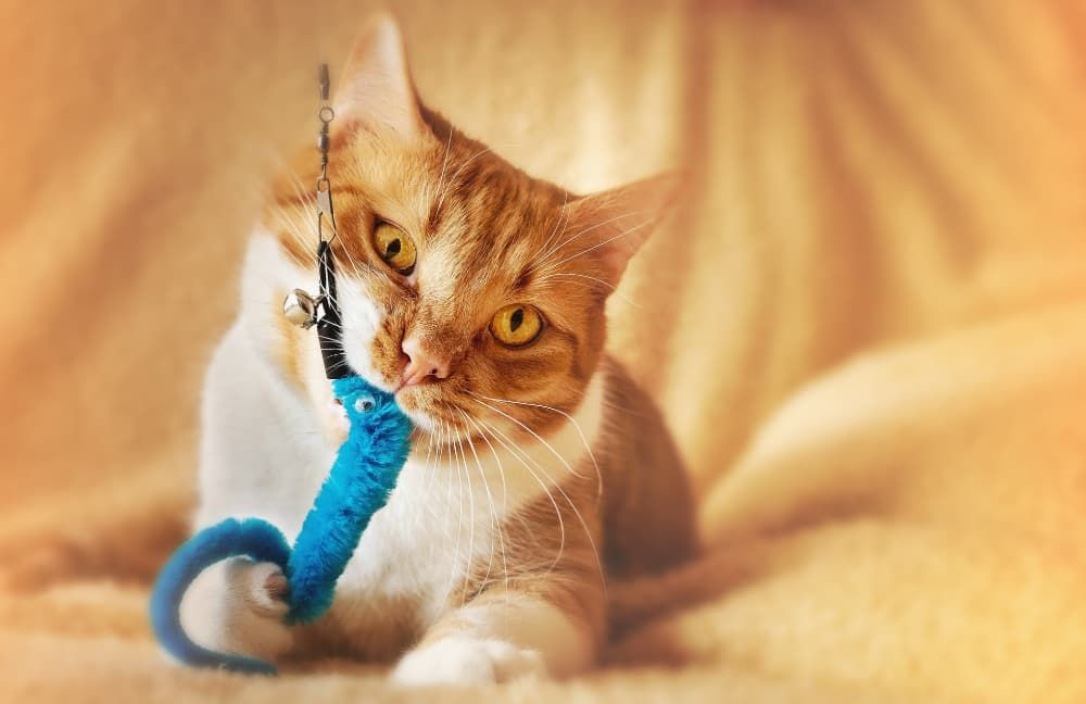 best cat toys to keep them busy