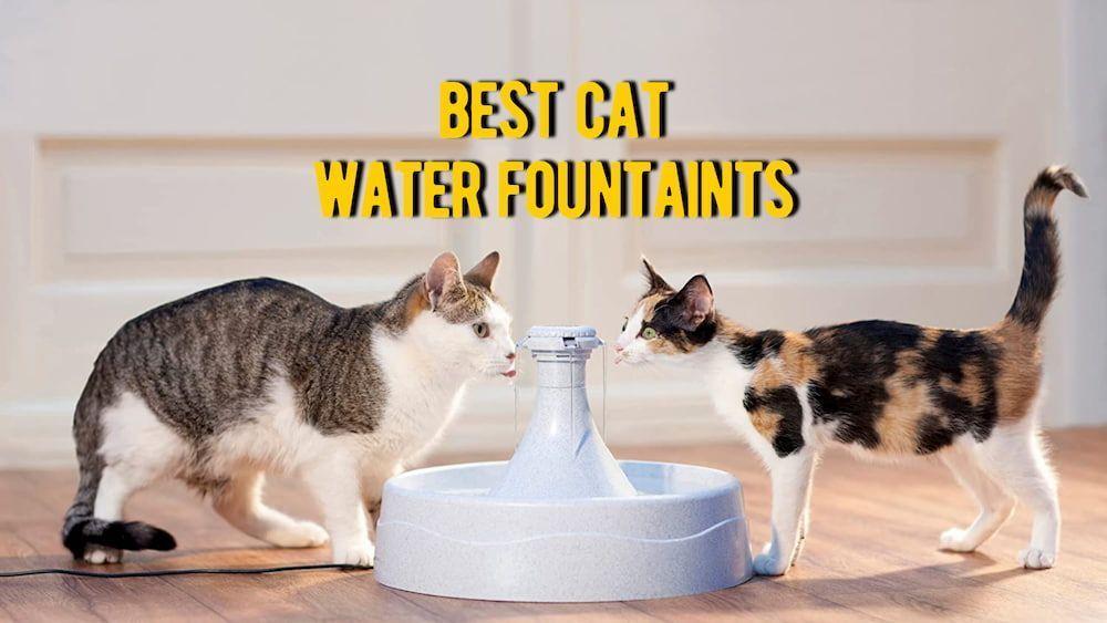 best cat water fountain