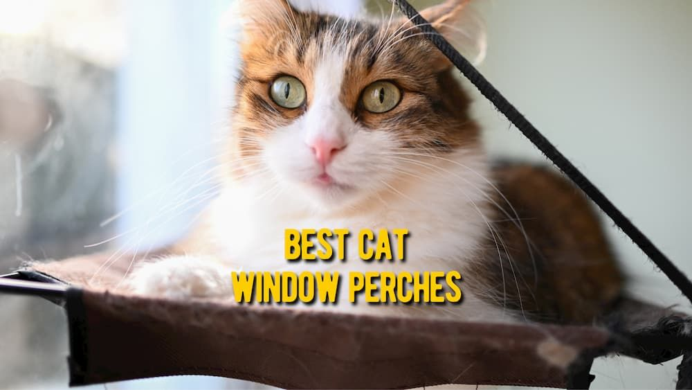 best cat window perches review