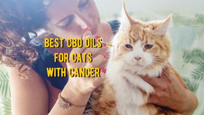 best cbd oil for cats with cancer