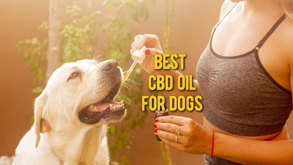 best cbd oil for dogs review