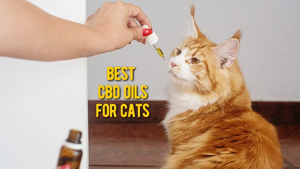 best cbd oils for cats