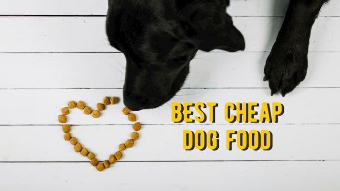 best cheap dog foods