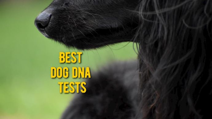 best dog dna tests