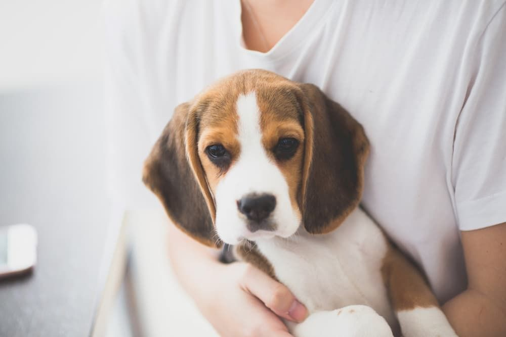 best dog food for small breed puppies