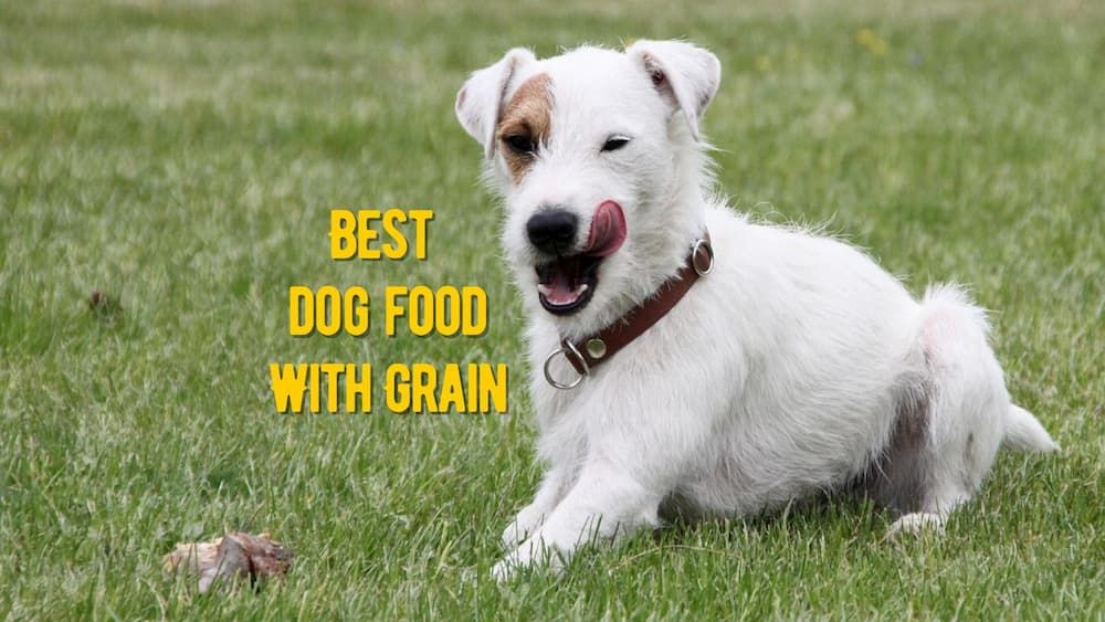 best dog food with grain