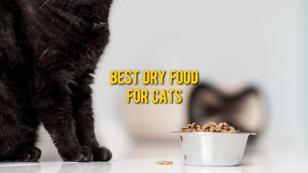 best dry food for cats review