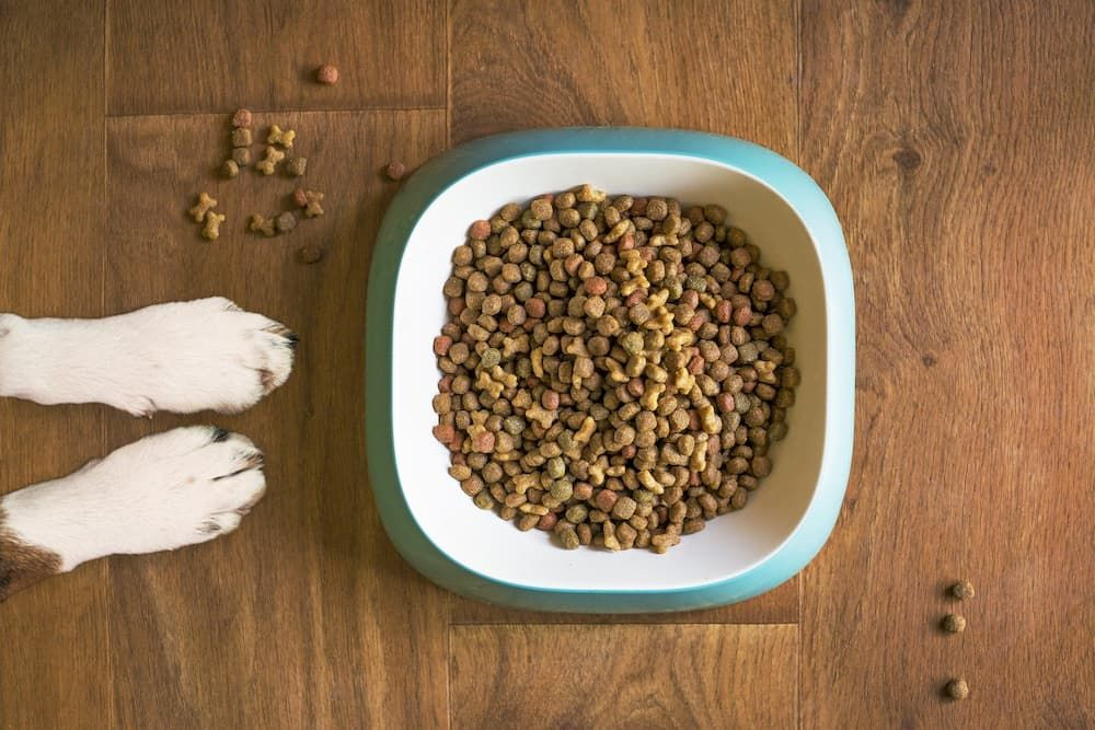 best-dry-foods-for-dogs