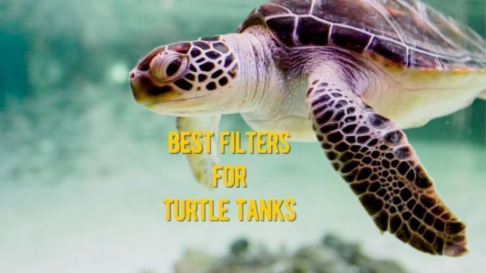 best filters for turtle tanks