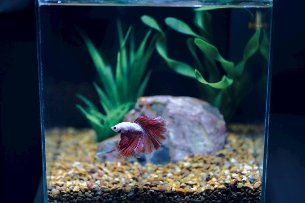 best fish tank for betta fish
