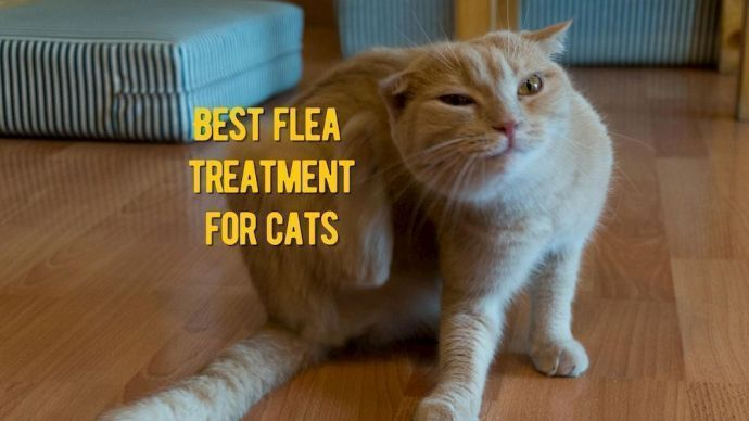 Best Flea Treatment For Cats Vet Recommended Flea Medicine For Sat