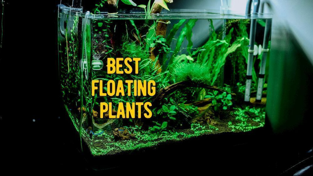 best floating plants review