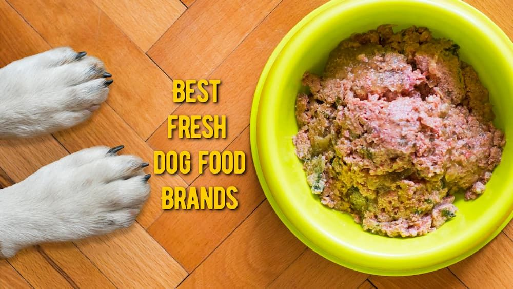 best fresh dog food brands review