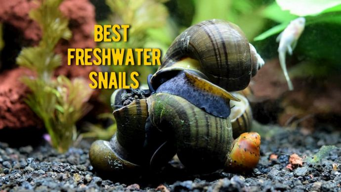 best freshwater snails review
