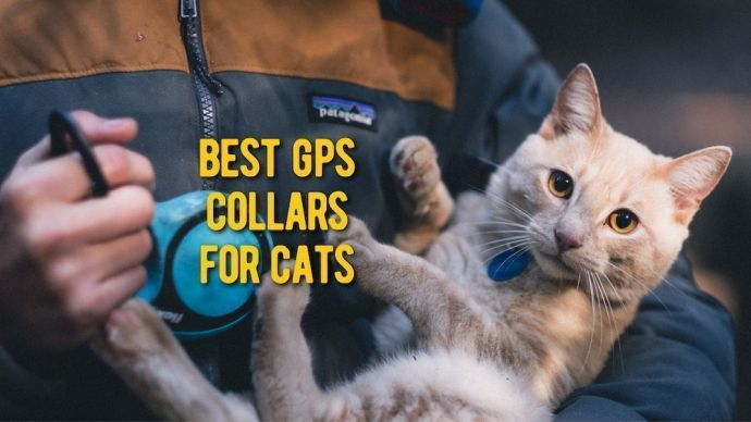 Best GPS Trackers for Cats