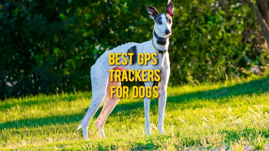 best gps collars for dogs