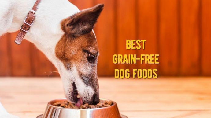 TOP Grain-Free Dog Food